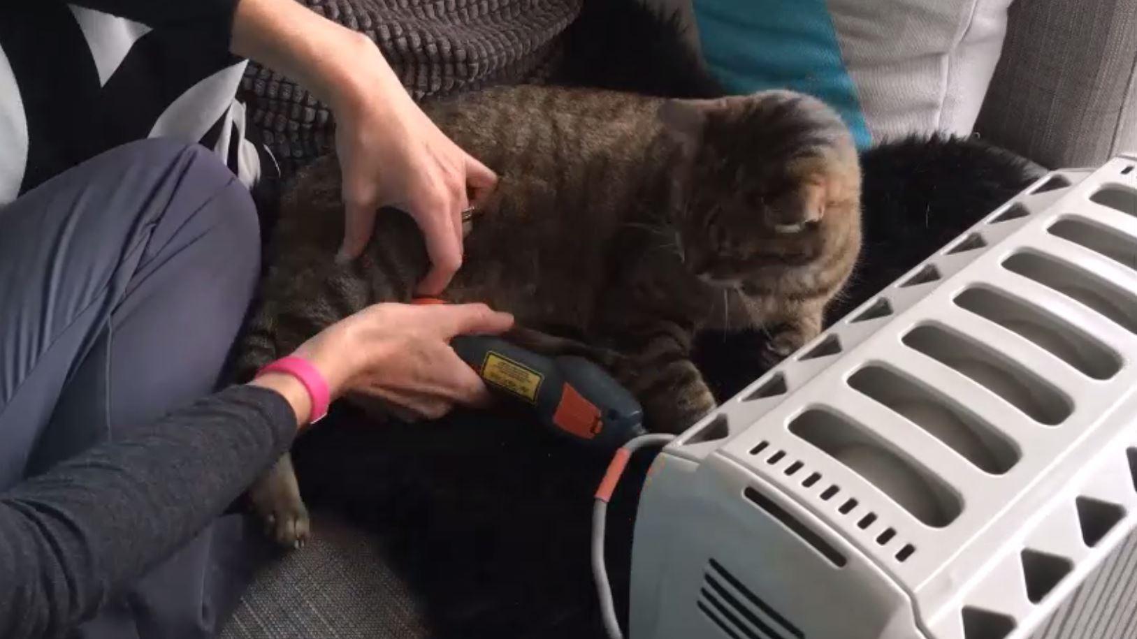 Trattamento Laserterapia MLS per gatti