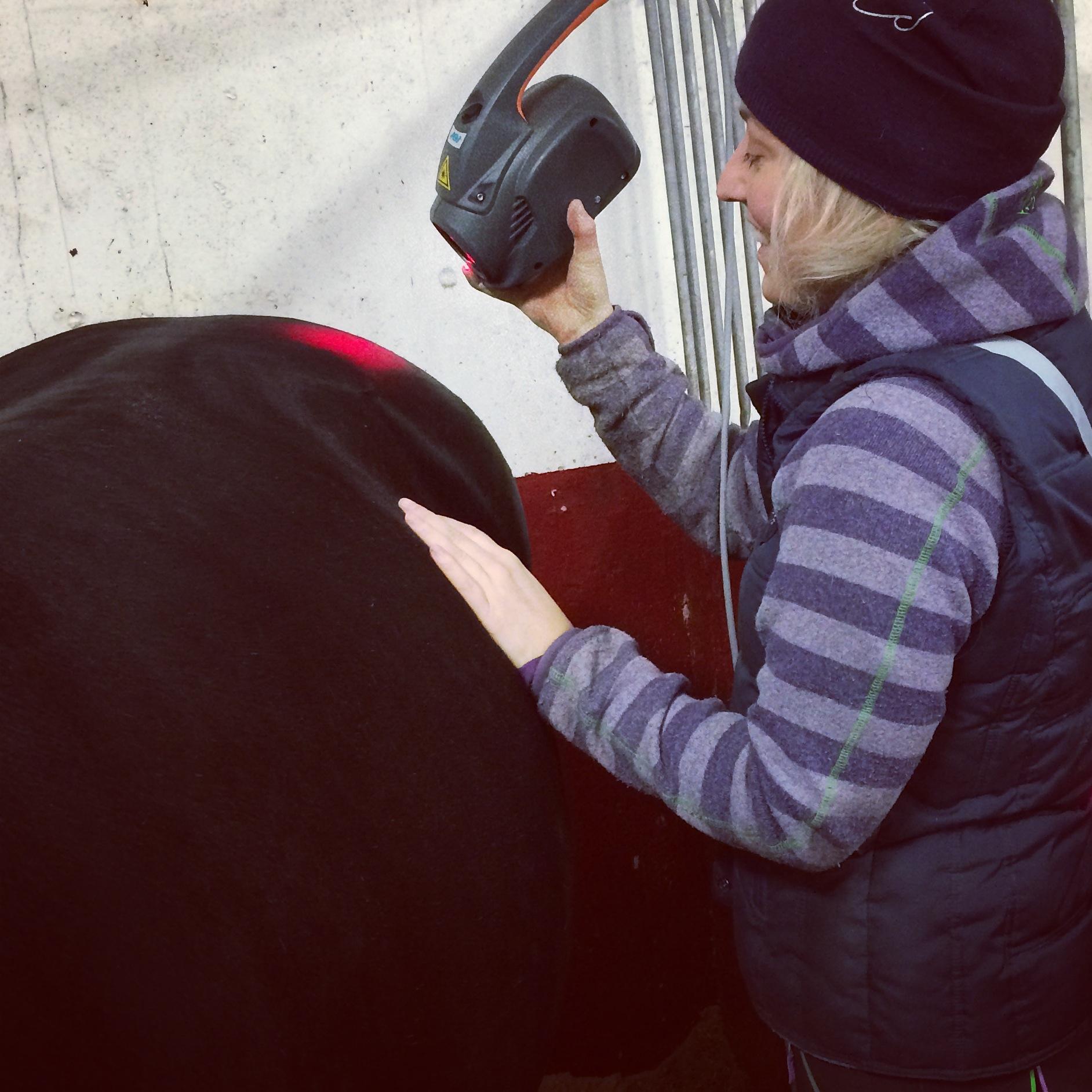 Trattamento di un cavallo con Mphi Equine Orange e il dispositivo Charlie Orange | Heidi Bye Svartangen