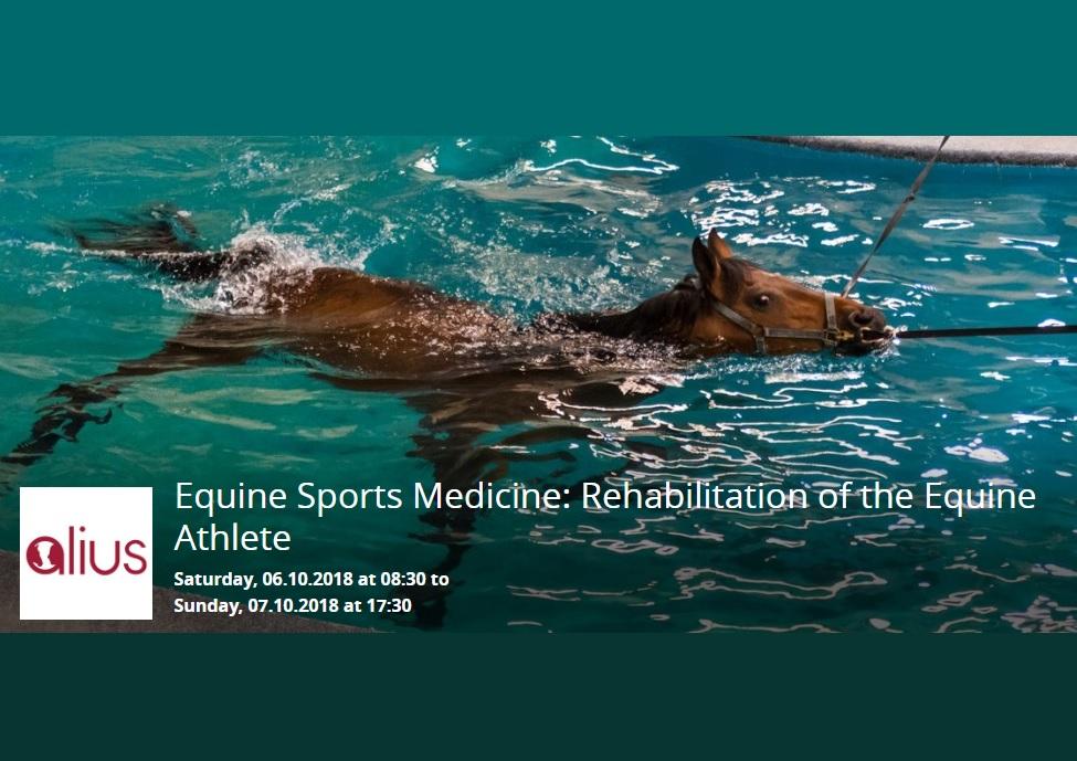 Equine Sports Medicine: rehabilitation of the equine athlete - Dubai, UAE