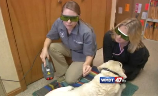 Wmdt com: Dr Humphries speaks about the benefits of MLS® on dogs
