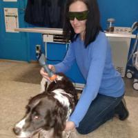 Laser Acupuncture in behavior problems of dog - Energy for Health 20