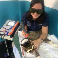 Deborah Sades – Medico Veterinario Zootecnista (MVZ) dell'Università Nazionale Autonoma del Messico (UNAM)