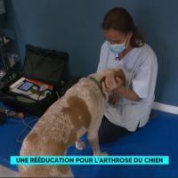 France5 | Le Mag de la Santé | Laserterapia MLS