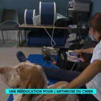 France5 | Le Mag de la Santé | Laserterapia MLS per artrosi nel cane