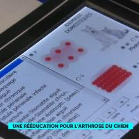 France5 | Le Mag de la Santé | Protocolli Mphi Vet Orange