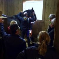 Formazione Laserterapia MLS per cavalli