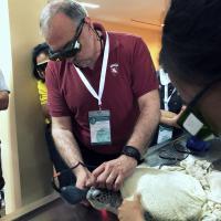 KUVIC 2019 (Hua Hin, Tailandia) - Tratamiento laser MLS animales exóticos