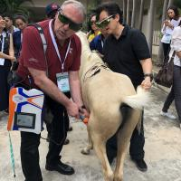 KUVIC 2019 (Hua Hin, Tailandia) - Tratamiento laser MLS para caballos
