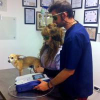 Treatment of a dog with Mphi Vet | Dr. Marass