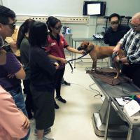 Seminario laserterapia MLS para perros  - Kuala Lumpur, Malasia