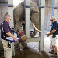 Photo Kansas City Zoo - Trattamento con Laserterapia MLS®