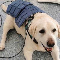 Easy Qs Vet - Magnetfeldtherapie für Hunde