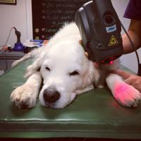 Behandlung von einem Hund mit der Vorrichtung Charlie Orange | Heidi Bye Svartangen