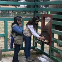 Curs Thérapie Laser sur les éléphants - Zoo Parque Ecologico Zacango, Mexique