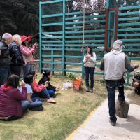 MLS Laser Therapy Training - Zoo Parque Ecologico Zacango, Mexico