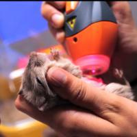 Trattamento con Mphi Vet Orange - Cronache Animali, Rai2