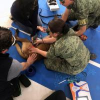 MLS Laser Tehrapy for dogs Pratical course, Mexico