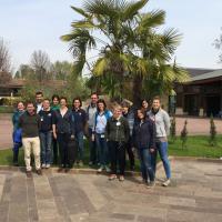 Laserterapia MLS® ed equini a Castelnuovo del Garda