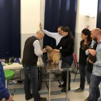 MLS Laser Therapy in veterinary dermatology - UNISVET, Milan