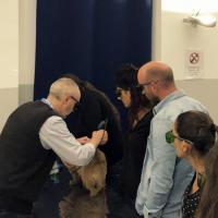 Veterinary laser therapy in dermatology - UNISVET, Milan