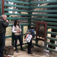 Thérapie Laser sur les éléphants - Zoo Parque Ecologico Zacango, Mexique
