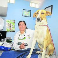 Dr Vanesa Terán - Laserterapia MLS per gli animali domestici