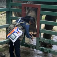 Thérapie Laser MLS avec Mphi Vet Orange pour éléphants - Zoo Parque Ecologico Zacango, Mexique