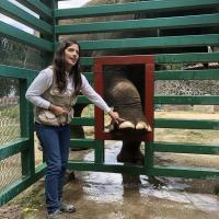 Thérapie Laser MLS sur les éléphants - Zoo Parque Ecologico Zacango, Mexique