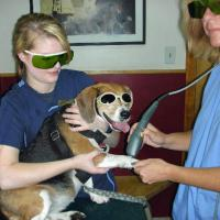 George Town Animal Center - MLS LAser Therapy for a dog