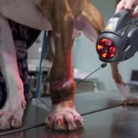 Laserterapia MLS per Chuck con Charlie, Mphi Vet