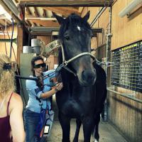 Mphi Equine Orange per laserterapia nei cavalli
