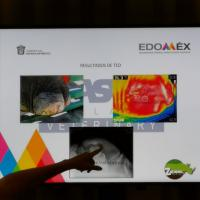 MLS para elefantes - speech MVZ Maria Moch, Zoológico del Parque Ecológico de Zacango (Mexico)