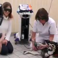 Zentrum für Tiermobilität | Mphi Vet Orange Laser Therapy