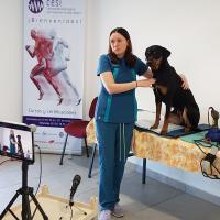 Cours laser ASAveterinary classe 4  - Dr Deborah Sades