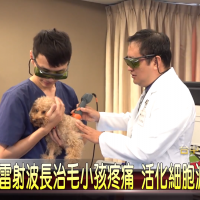 Laserterapia MLS® e il dispositivo Mphi Vet Orange su TCNN, Taiwan
