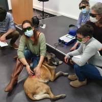 Formation à la thérapie au laser MLS pour chiens avec le Dr Burdisso