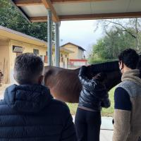 Horse Laser Therapy Training - Dr Rosso