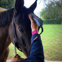 Training Laserpuncture and Laser Therapy for horses - Dr Rosso