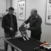 Mphi Vet Orange -  Training MLS® Laser Therapy to Nijkerk