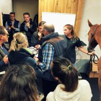 Laserterapia MLS per gli equini - Francia