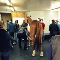 Formazione Laser MLS per equini - Francia