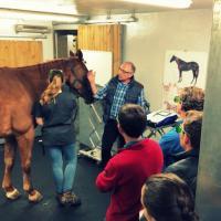 Formazione Laserterapia MLS per cavalli - Francia