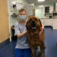 Thérapie laser MLS® dans la rééducation post-chirurgicale de Bruno