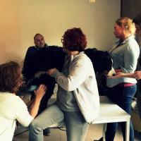 Trattamento di Laserterapia MLS per cani