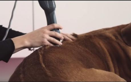 Embedded thumbnail for Tutoriel MLS®   colonne vertebrale   Chien