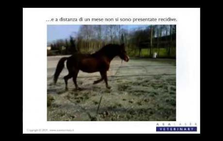 Embedded thumbnail for MLS® per il trattamento di una sobbattitura in un cavallo scalzo