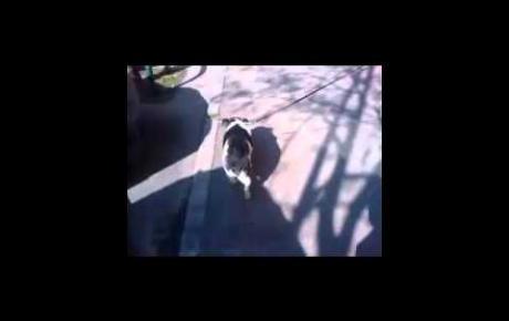 Embedded thumbnail for Meticcio con osteoartrosi
