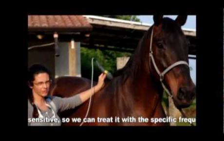 Embedded thumbnail for Applicazione della Laserterapia MLS® sul cavallo