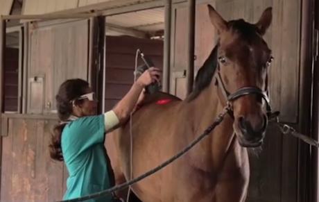 Embedded thumbnail for Lux, Pferd mit Läsion im seitlichen Bereich des Fesselträgers