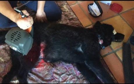 Embedded thumbnail for Lexi, Labrador con zoppia cronica e grave paresi